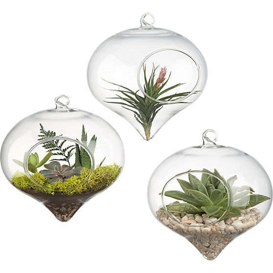 hanging-glass-terrarium